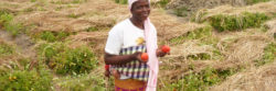 Bénéficiaire microfinance sociale en milieu rural
